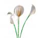 Arum 3 fleurs LMP La Maison de la Piscine