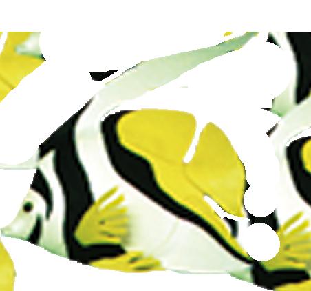 D coration mousse poisson pour espaces aquatiques la for Decoration pour poisson
