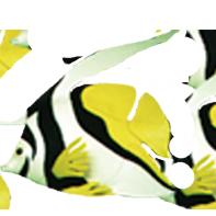 Décoration mousse poisson